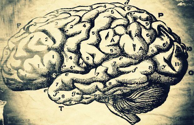 1 brains