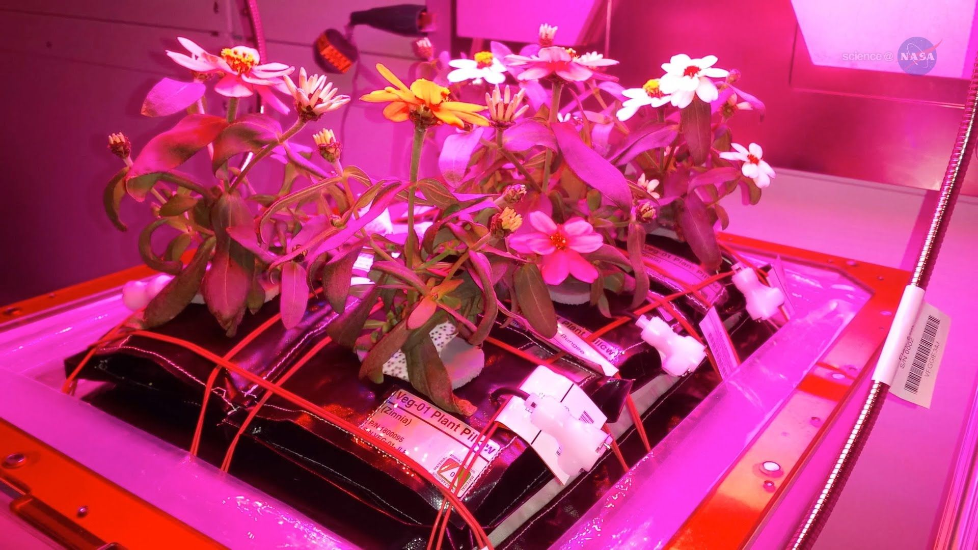 how to grow plants in space