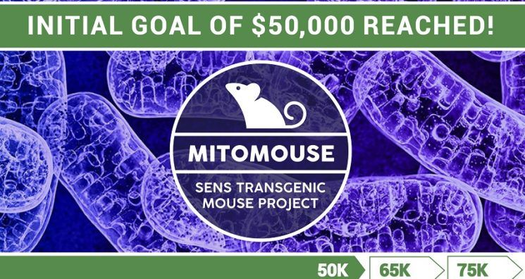 The MitoMouse Project Smashes its Initial Fundraising Goal!