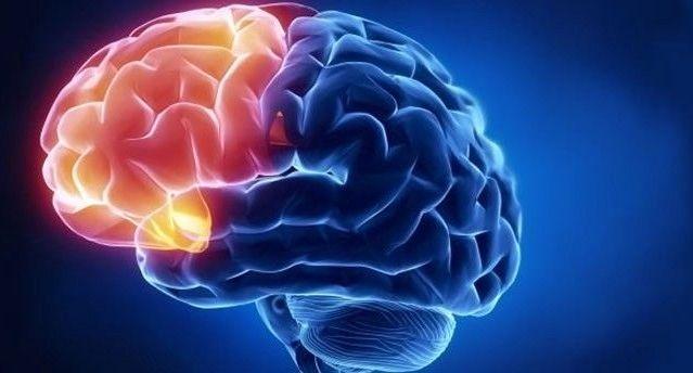 Machine Learning Of Human Brain