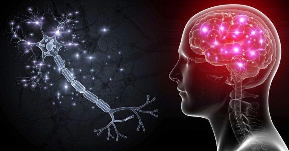 Brain memory understanding