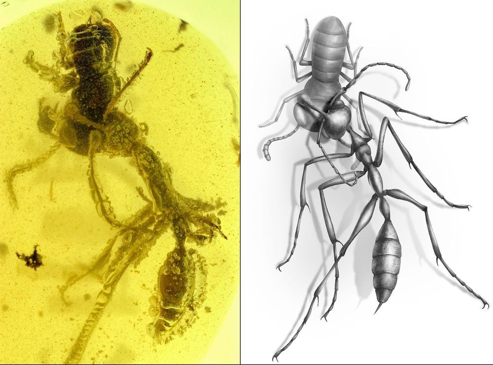 New Fossil Discovery Shows How Ancient Hell Ants Hunted