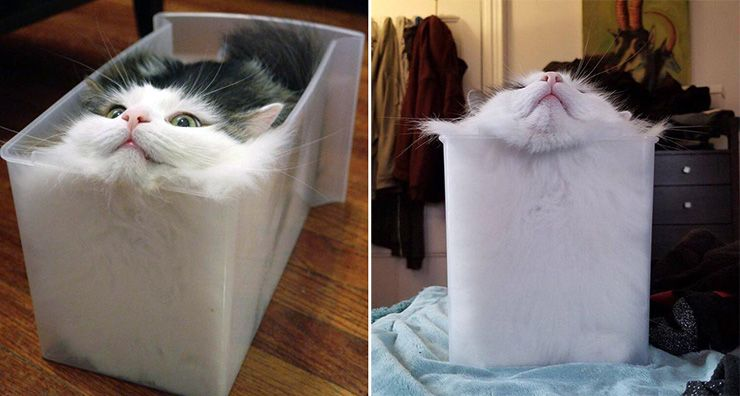 are cats liquid nobel prize