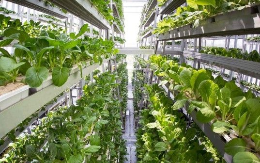 Sky Greens, vertical farming, vertical farming Sky Greens, vertical farming Singapore, vertical farming INDEX
