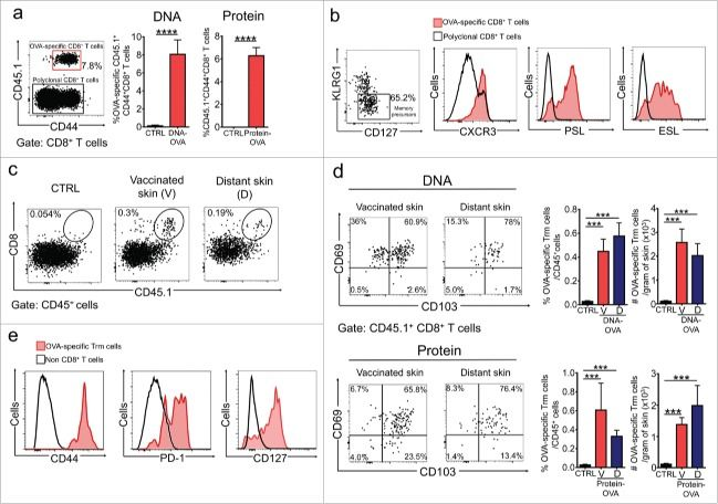 Vaccination-induced skin-resident memory CD8+ T cells mediate strong