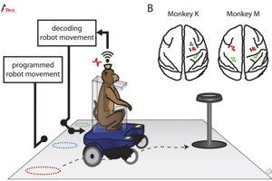 monkeys-wheelchairs-thought-controlled-6