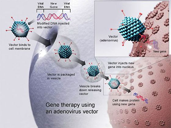 Gene Therapy PowerPoint